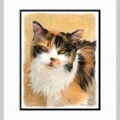 Calico Cat  Art Print Matted 11x14