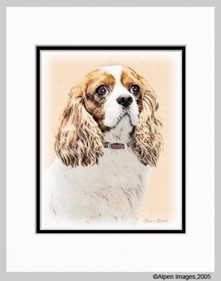 Cavalier King Charles Spaniel Matted Art Print 11x14