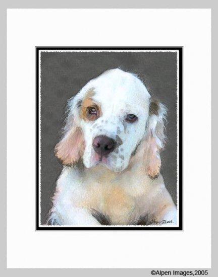 Clumber Spaniel Puppy Dog Art Print Matted 11x14