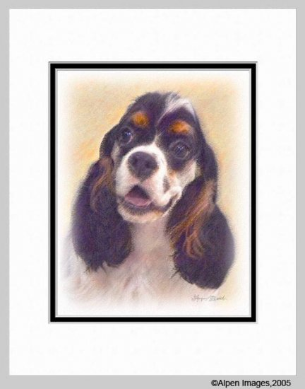 Cocker Spaniel Parti Color Dog Art Print Matted 11x14
