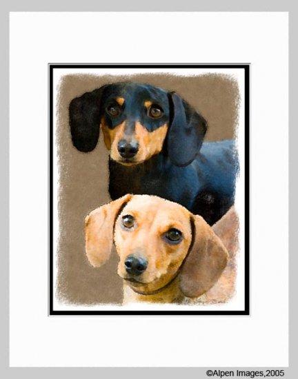 Dachshund Dog Art Print Matted 11x14
