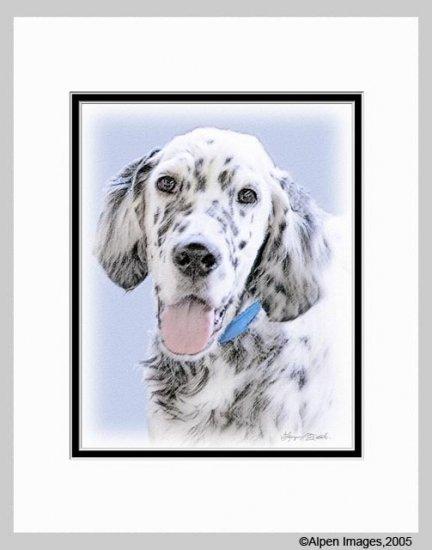 English Setter Matted Dog Art Print 11x14