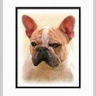 French Bulldog Frenchie Matted Dog Art Print 11x14