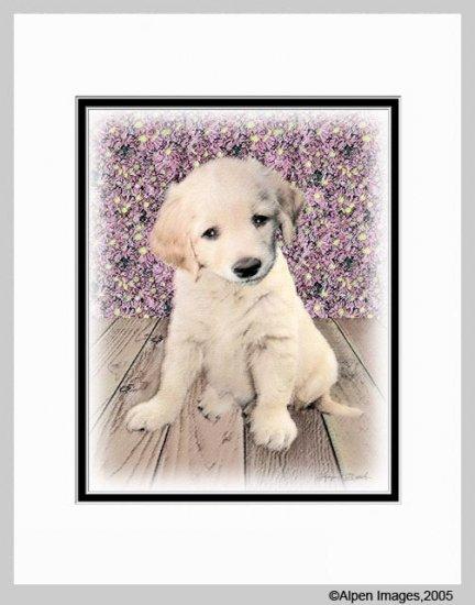 Golden Retriever Puppy Matted Dog Art Print 11x14