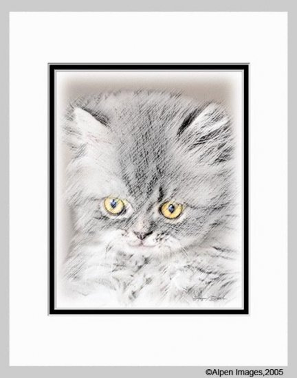 Gray Kitten Cat Art Print Matted 11x14