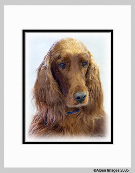 Irish Setter Dog Art Print Matted 11x14