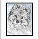 Keeshond Dog  Print Matted 11x14
