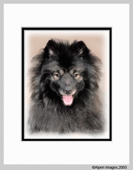 Keeshond Dog Art Print Beautiful Boy Matted 11x14