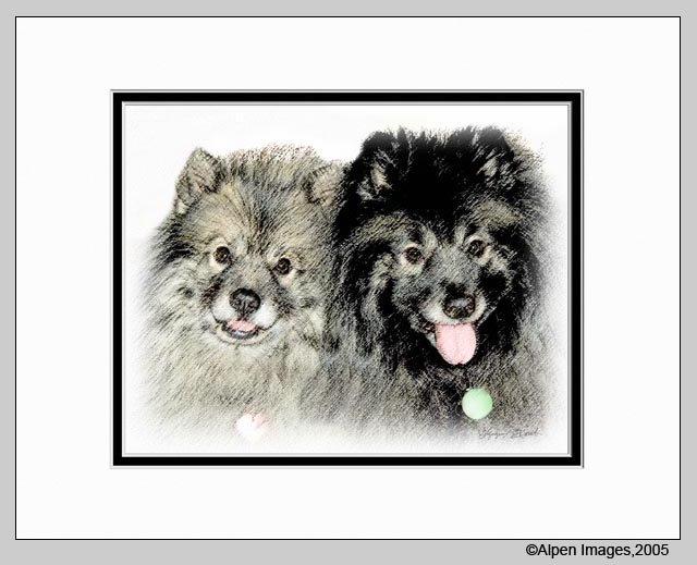 Keeshond Dog Art Print Matted 11x14