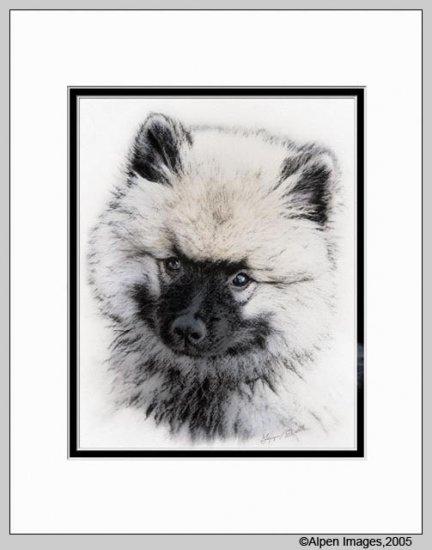 Keeshond Dog Art Print Puppy Matted 11x14