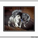 Keeshond Dog Art Print Puppy Playtime Matted 11x14