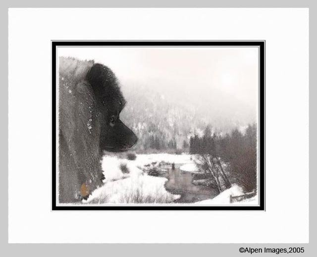 Keeshond Dog Art Print Shadow's Creek Matted 11x14