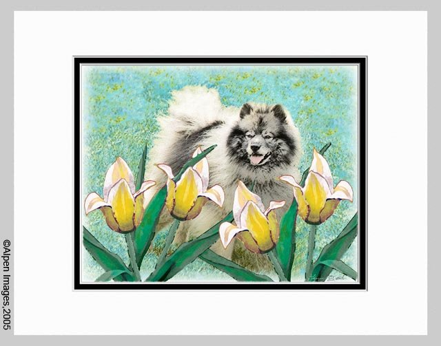 Keeshond Dog Art Print Tulips Matted 11x14