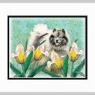 Keeshond Dog Art Print Tulips Matted 11x14