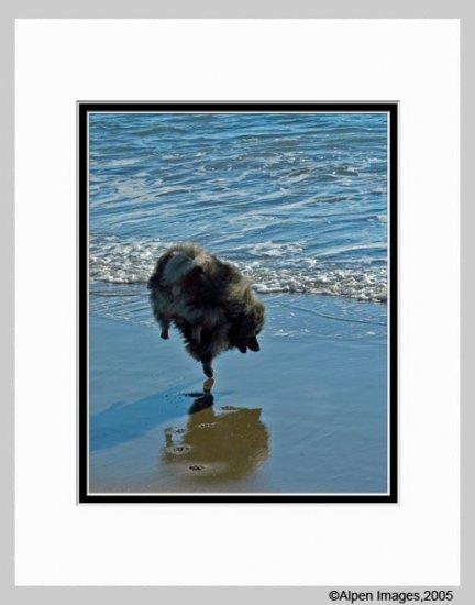 Keeshond Dog Photograph Keeshond Ballet Matted 11x14