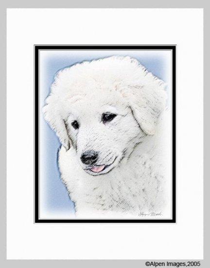 Kuvasz Puppy Dog Art Print Matted 11x14