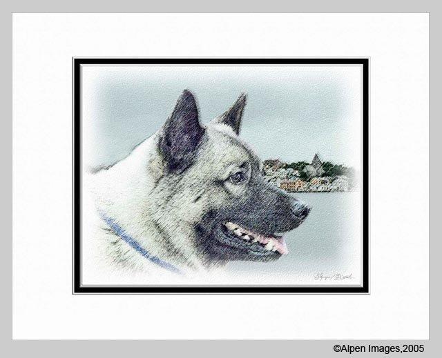 Norwegian Elkhound Dog Art Print Matted 11x14