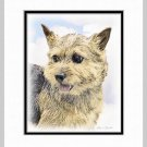 Norwich Terrier Art Print Matted 11x14