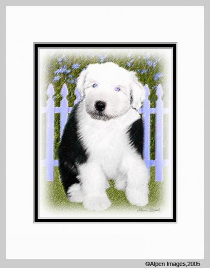Old English Sheepdog Puppy Matted Art Print 11x14