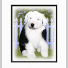 Old English Sheepdog Puppy Matted Art Print 11x14