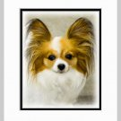 Papillon Matted Dog Art Print 11x14