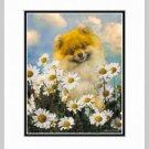Pomeranian Matted Art Print 11x14