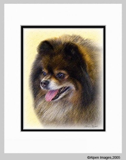 Pomeranian Pom Dog Art Print Matted 11x14