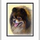 Pomeranian Pom Dog Art Print Matted 11x14