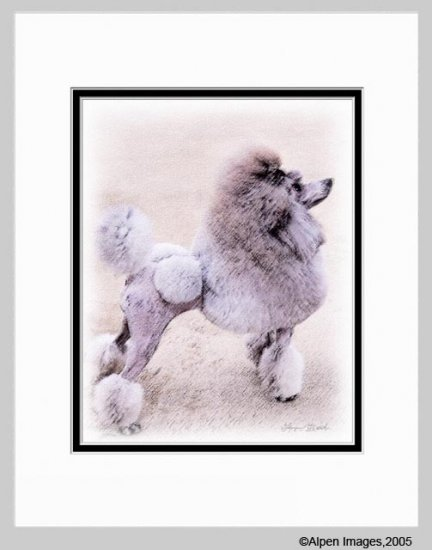 Poodle Dog Matted Art Print 11x14