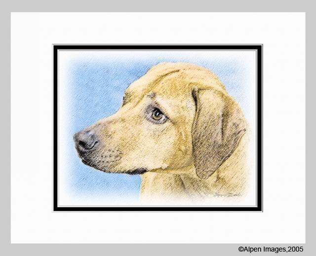 Rhodesian Ridgeback Dog Matted Art Print 11x14