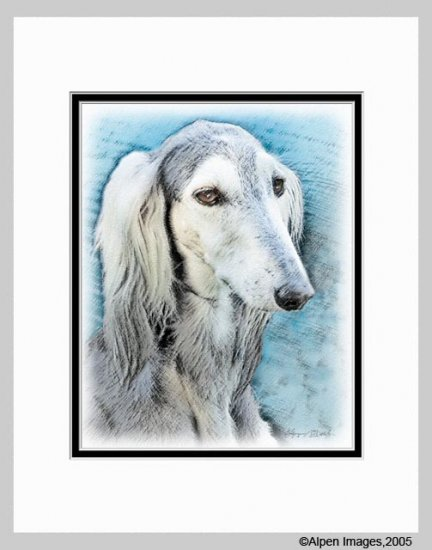 Saluki Dog Matted Art Print 11x14