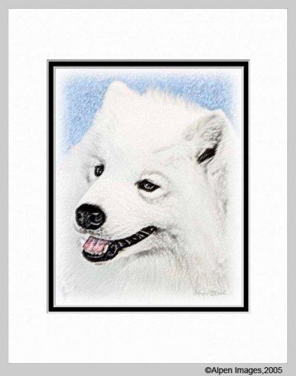 Samoyed Dog Art Print Matted 11x14