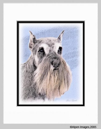 Schnauzer Dog Matted Art Print 11x14