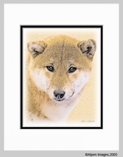 Shiba Inu Matted Art Print 11x14