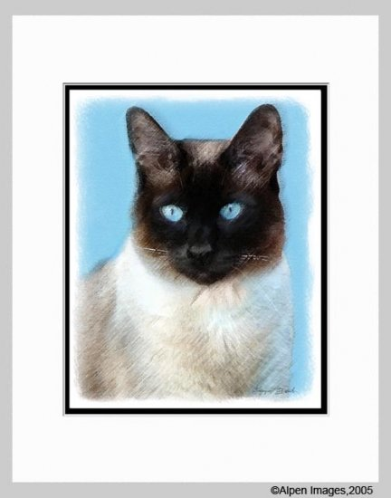 Siamese Cat Art Print Matted 11x14