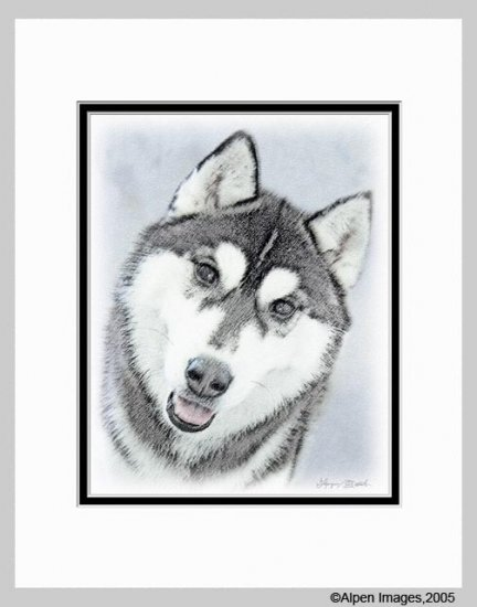 Siberian Husky Dog Art Print Matted 11x14