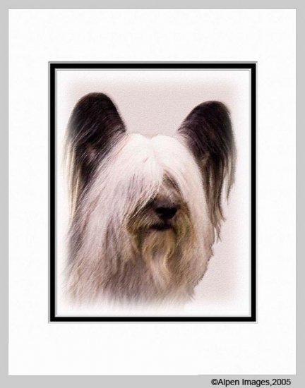 Skye Terrier Art Print  Matted 11x14