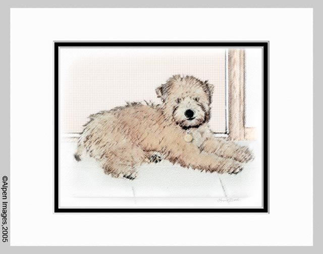 Soft Coated Wheaten Terrier Puppy Print Matted 11x14