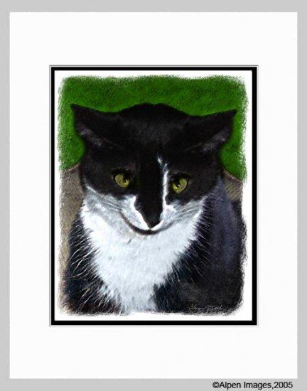 Tuxedo Cat Art Print Matted 11x14
