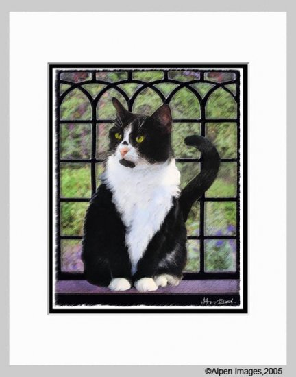 Tuxedo Cat by Window Art Print Matted 11x14
