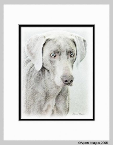 Weimaraner Dog Art Print Matted 11x14