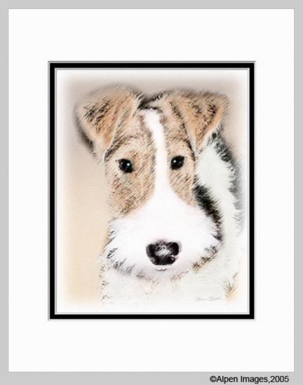 Wire Hair Fox Terrier Dog Art Print Matted 11x14