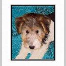 Wire Hair Fox Wired Terrier Puppy Print Matted 11x14