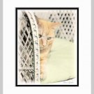 Yellow Cat on Wicker Art Print Matted 11x14
