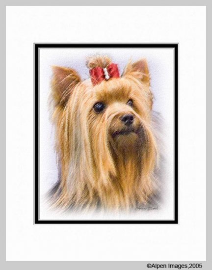 Yorkshire Terrier Yorkie Dog Print 11x14 Matted