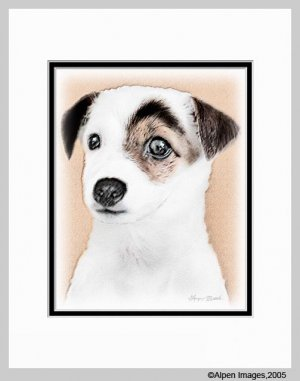 Jack Russell Terrier Dog Art Print 11x14 Matted