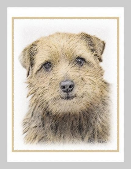 6 Norfolk Terrier Puppy Note or Greeting Cards