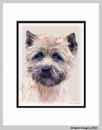 Cairn Terrier Dog Art Print Matted 11x14