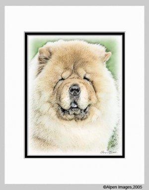 Chow Chow Dog Art Print Matted 11x14