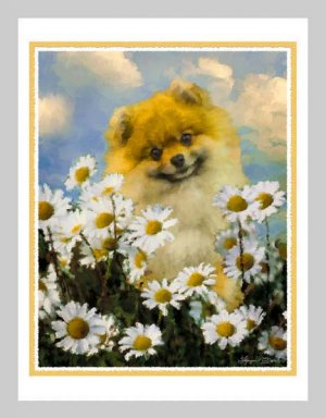 6 Pomeranian Note or Greeting Cards